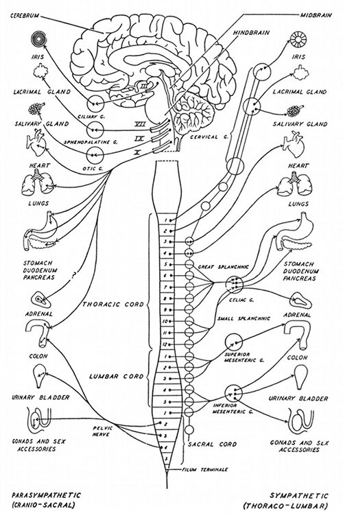 polarity therapy volume 2  book 6  chart 17